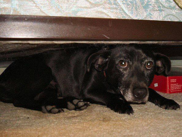 0871.dog-under-bed