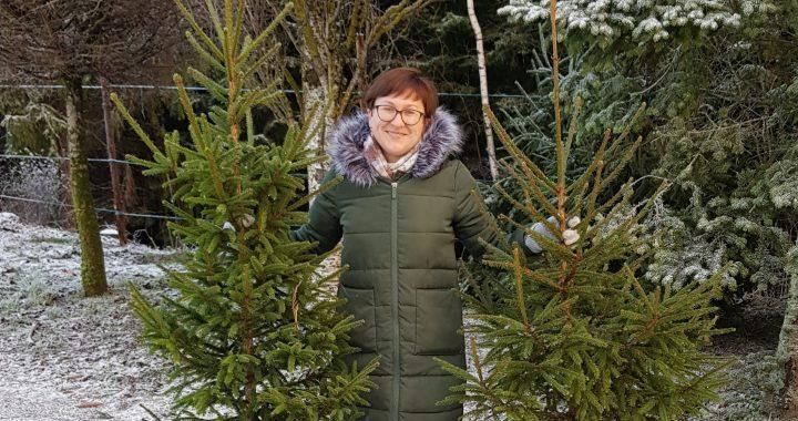 """Miško auginimo specialistė Gražina Banienė: """"Populiariausios Kalėdų puošmenos – kirstos paprastosios eglutės, kurių kaina – 7–13 eurų""""."""