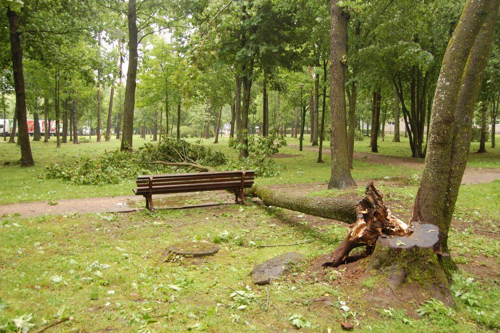 Siaučiančios vėtros rajone medžius išvarto kasmet. Nuotr iš redakcijos archyvo.