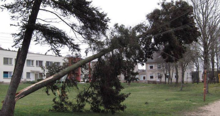 """Pernai pavasarį pro Lietuvą praūžęs uraganas """"Laura"""" madžius vartė ir ant elektros stulpų. Andriaus juškevičiaus nuotr."""