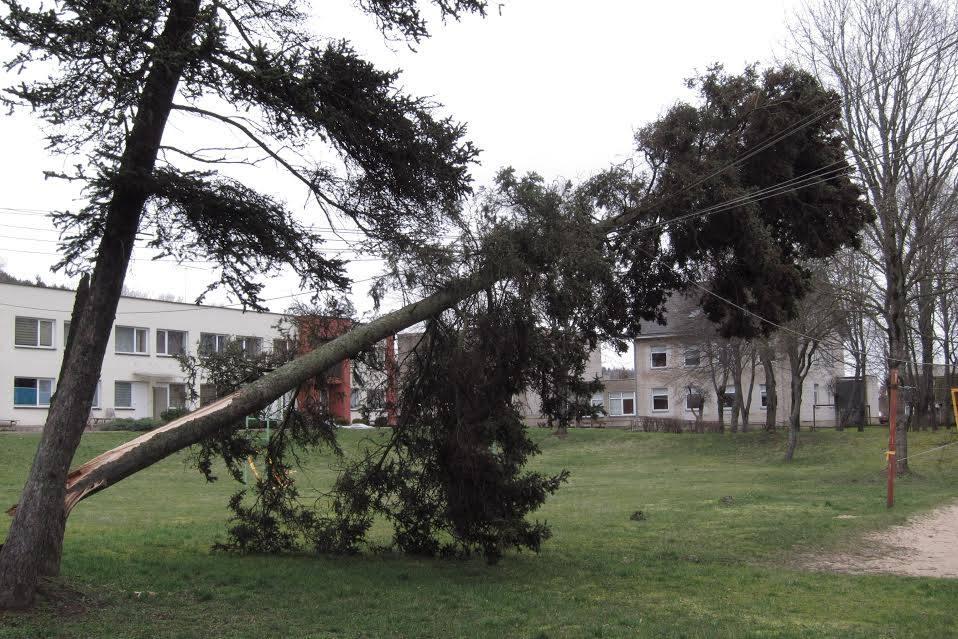 """Praėjusią savaitę pro Lietuvą praūžęs uraganas """"Laura"""" madžius vartė ir ant elektros stulpų. Andriaus juškevičiaus nuotr."""