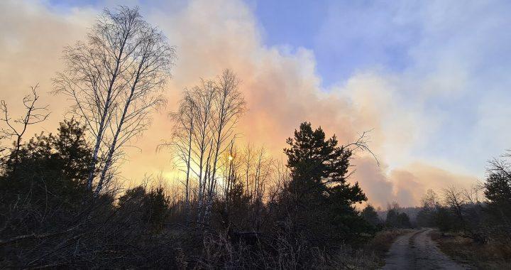 Prieš dvi savaites aplink Černobylio meistelį kilę miškų gaisrai kelia nerimą dėl radiacinės saugos. AP nuotr.