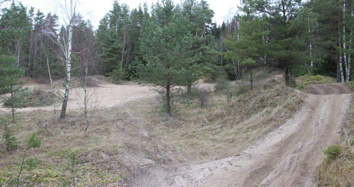 """Savivaldybės administracijos direktorė Jolanta Girdvainė """"Švyturiui"""" teigė, jog Savivaldybės reikalas yra informuoti Aplinkos ministeriją apie Kalgraužių miško problemą. Tai esą ir buvo padaryta. Nuotr. iš redakcijos archyvo."""