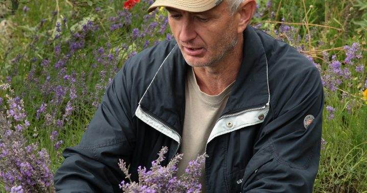 Arūnas Prialgauskas savo paties kuriamame sklype augina levandas. Autorės nuotr.