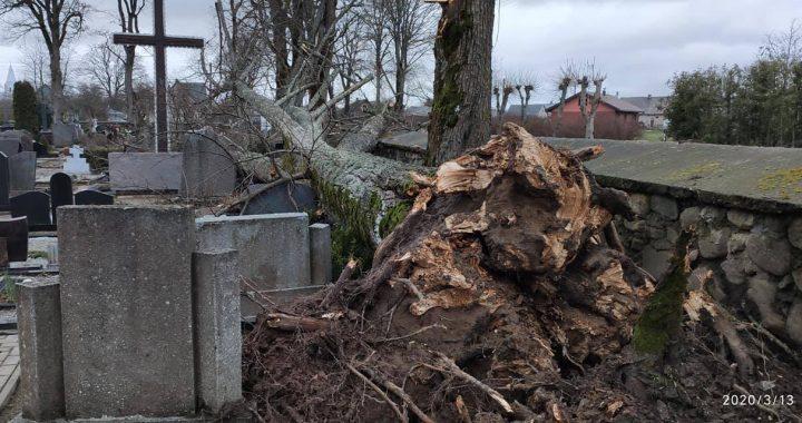 """Pavasarį pro Lietuvą praūžęs uraganas """"Laura"""" nusiaubė Kretingos miesto kapines."""