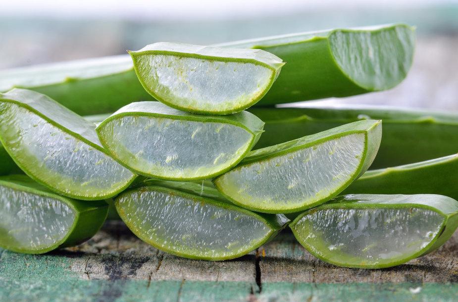 Alijošius - sveikatai itin naudingas augalas, bet jo nereikia padauginti. Fotolia nuotr.