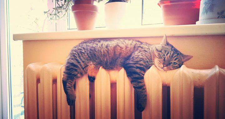 Radiatorius katinas