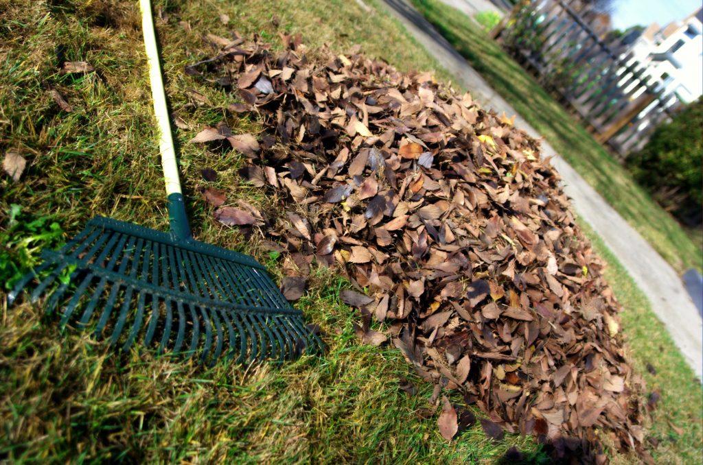 Leaf_rake_and_leaves